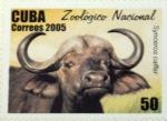 bufalo2